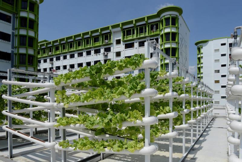 20210811 urban farming.jpg