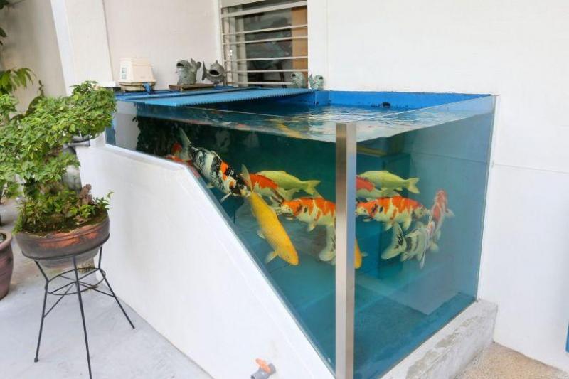 20210827-fish tank no more.jpg