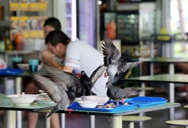 Hawker Centres plagued by Hygiene Issues