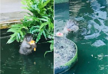 水獭, otters