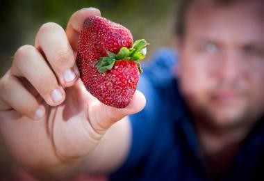 澳洲草莓出现恶意藏针事件。