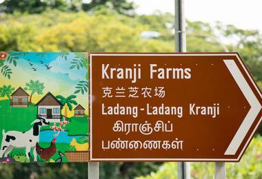 想不到吧?新加坡竟然也有农场!(互联网)
