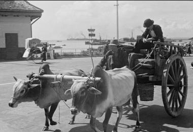载货载人的牛车。(Harrison Forman摄)
