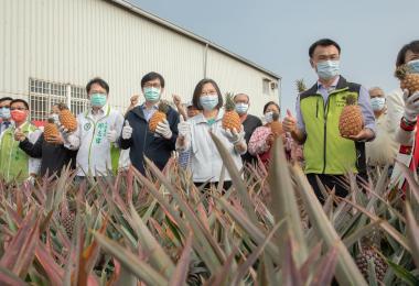 中国大陆禁台湾凤梨反帮其打响品牌  其他国家抢着进口