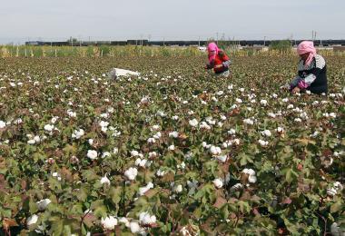 """H&M拒用新疆棉被中国人抵制 """"幕后黑手""""原来是它"""