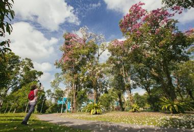新加坡成了缤纷花花世界 各区领导当起赏花向导