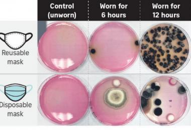 据微生物学家所述,所有口罩内的温湿环境往往有利于微生物的滋生。(海峡时报)