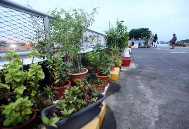 武吉巴督西5道第395A座顶楼停车场的盆栽