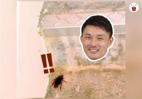 20181217_cockroach