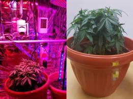 还温室培植。