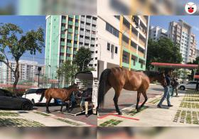 20191017 horse cover