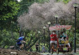"""北半球9月刚入秋,新加坡却迎来""""第二春"""""""