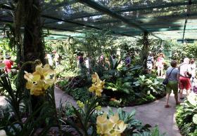 新加坡植物园内拥有多年历史的国家胡姬园。(联合早报)