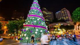 圣诞树供不应求