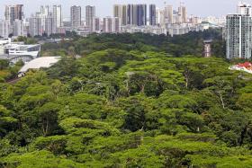 绿色新加坡